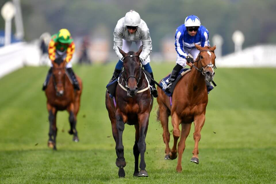 Most Popular Horse Racing Bets Reviewed