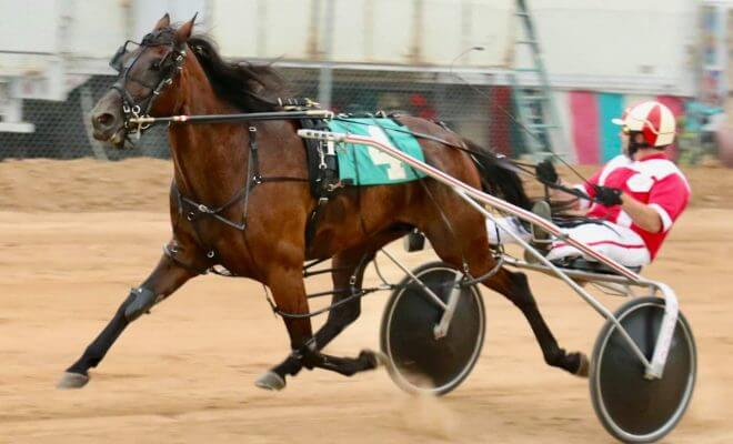 A Detailed Bettor's Guide To Harness Racing